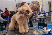 International grooming contest held in Sokolniki