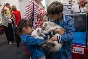 Cat Show held in Sokolniki