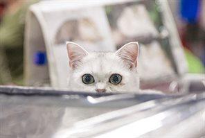Выставка кошек в КВЦ «Сокольники»