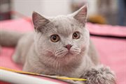 Sokolniki Hosts a Cat Show