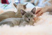Cat Show in Sokolniki
