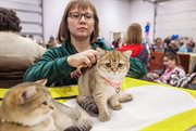 KoShariki Cat Show Took Place in Sokolniki