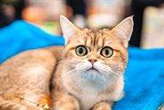Cat shows in Sokolniki