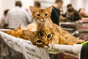 Sokolniki hosts show and sale of cats