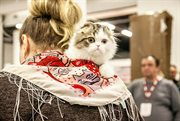 Mister Cat international cat show