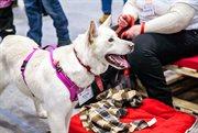 В Сокольниках прошел фестиваль «Собаки, которые любят»