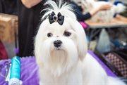 本周末索科利尼基会展中心举办宠物展