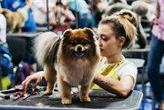 """BonsheryGroom""国际猫狗美容比赛在索科利尼基举行"