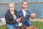 Exotics to help, or How the Lutsan family began to grow sweet potatoes