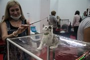 Advertising kitten show Bast-Moscow was held in Sokolniki