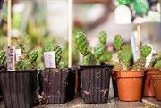 В Сокольниках прошел Cactus Fest