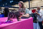 Осенняя выставка кошек «КоШарики шоу»